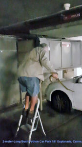 Snake found in basement carpark